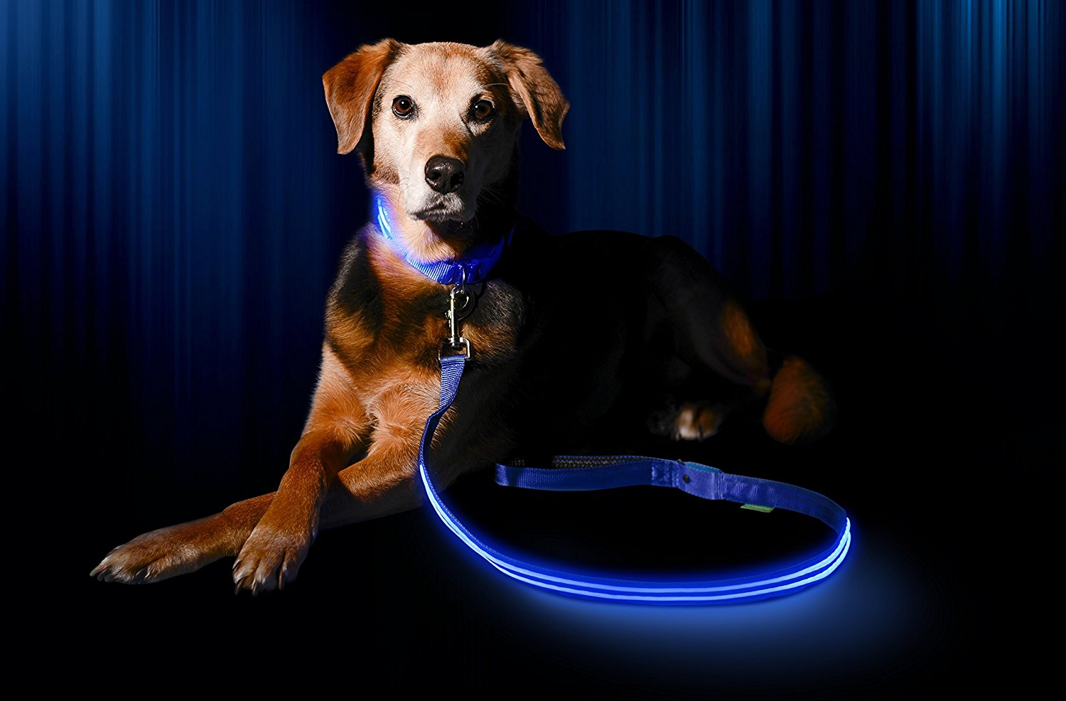 Coolest LED Dog Leashes You Can Buy For Your Dog